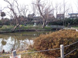 八幡宮の池